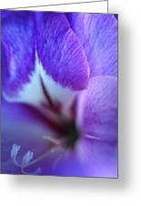 Gladiola Close-up Greeting Card by Kathy Yates
