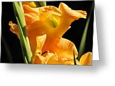 Gladiola Greeting Card