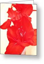 Gladiola Stem Greeting Card