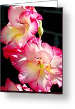 Gladiolas Greeting Card