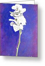 Gladiolus 1 Greeting Card
