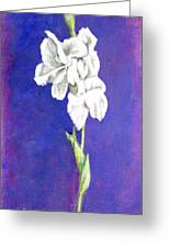 Gladiolus 2 Greeting Card