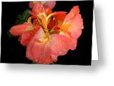Gladiolus Bloom Greeting Card