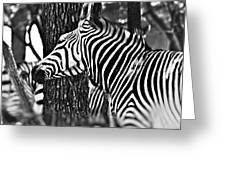 Glamorous In Black And White Greeting Card
