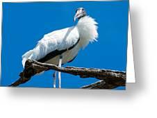 Glamorous Wood Stork Greeting Card