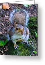 Glasgow Squirrel Greeting Card