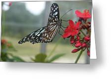 Glass Wing Butterfly Greeting Card