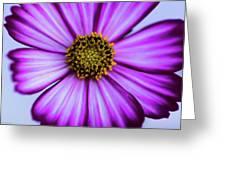 Glass Zinnia Greeting Card