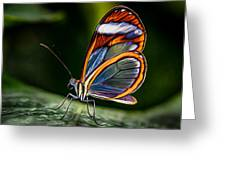 Glasswing Butterfly Iridescence  Greeting Card