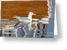 Glaucous-winged Gull Greeting Card