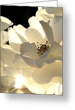 Gleaming White Greeting Card