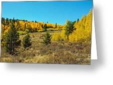 Glen Of Color Greeting Card