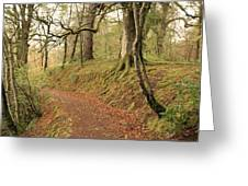 Glengarry Forest Scotland Greeting Card
