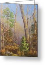 Glenmoor Woods, Sunset Greeting Card