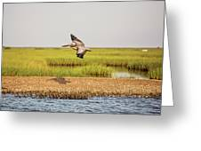 Gliding Over A Shell Island Greeting Card