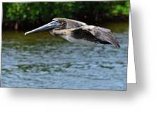 Gliding Pelican Greeting Card