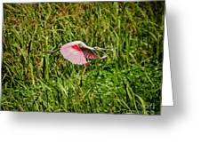 Gliding Spoonbill In Bayou Greeting Card