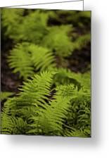 Glimmering Ferns Greeting Card