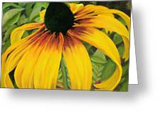 Glimpse Of Beauty Greeting Card