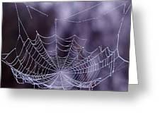 Glistening Web Greeting Card