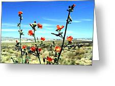 Globe Mallows Greeting Card