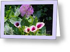 Globe Thistle And Calla Lilies Greeting Card by Corey Ford