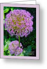 Globe Thistle Flowers Greeting Card