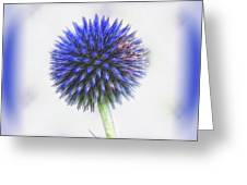 Globe Thistle With Vignette Greeting Card