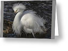 Glorious Egret Greeting Card