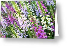 Glorious Foxgloves Greeting Card