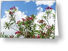 Glorious Fragrant Oleanders Reaching For The Sky Greeting Card