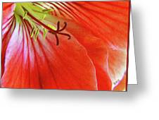 Glorious Geranium Greeting Card