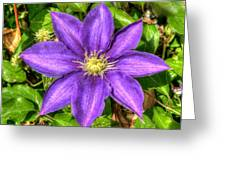 Glorious Glowing Clematis Greeting Card