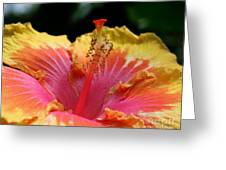 Glorious Hibiscus Greeting Card