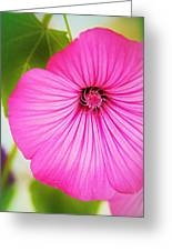 Glorious In Pink Greeting Card