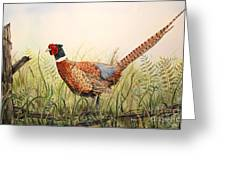 Glorious Pheasant-1 Greeting Card