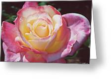 Glorious Pink Rose Greeting Card