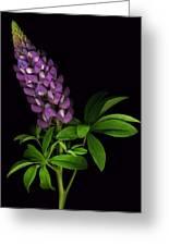 Glorious Purple Lupine Greeting Card