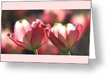 Glorious Spring Greeting Card