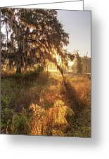 Glorious Sunrise At The Oak Tree Greeting Card