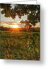 Glorious Sunset Greeting Card