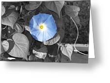 Glory Blue Greeting Card