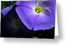 Glory In The Morning Greeting Card