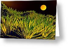 Glow Of Night Greeting Card