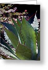 Glowing Agave Greeting Card