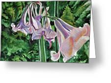 Glowing Amaryllis Greeting Card