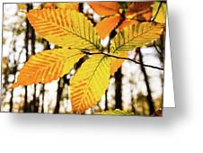 Glowing Beech Leaf Branch Greeting Card