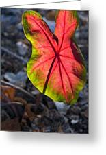 Glowing Coladium Leaf Greeting Card