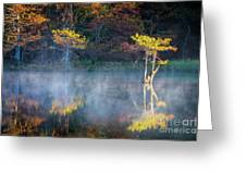 Glowing Cypresses Greeting Card