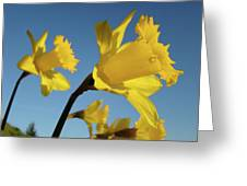 Glowing Daffodil Flowers Floral Art Baslee Troutman Greeting Card
